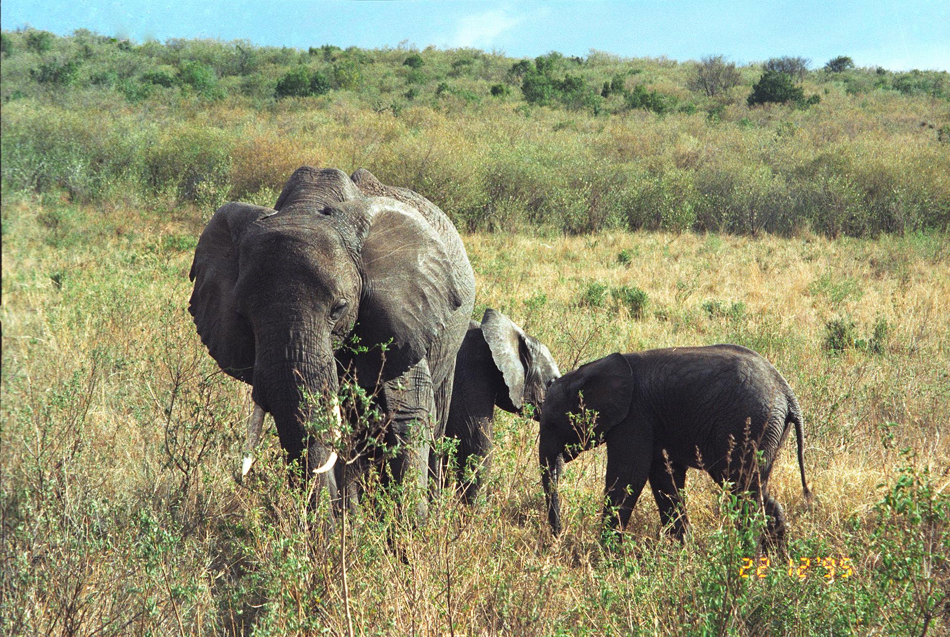 Land mammals