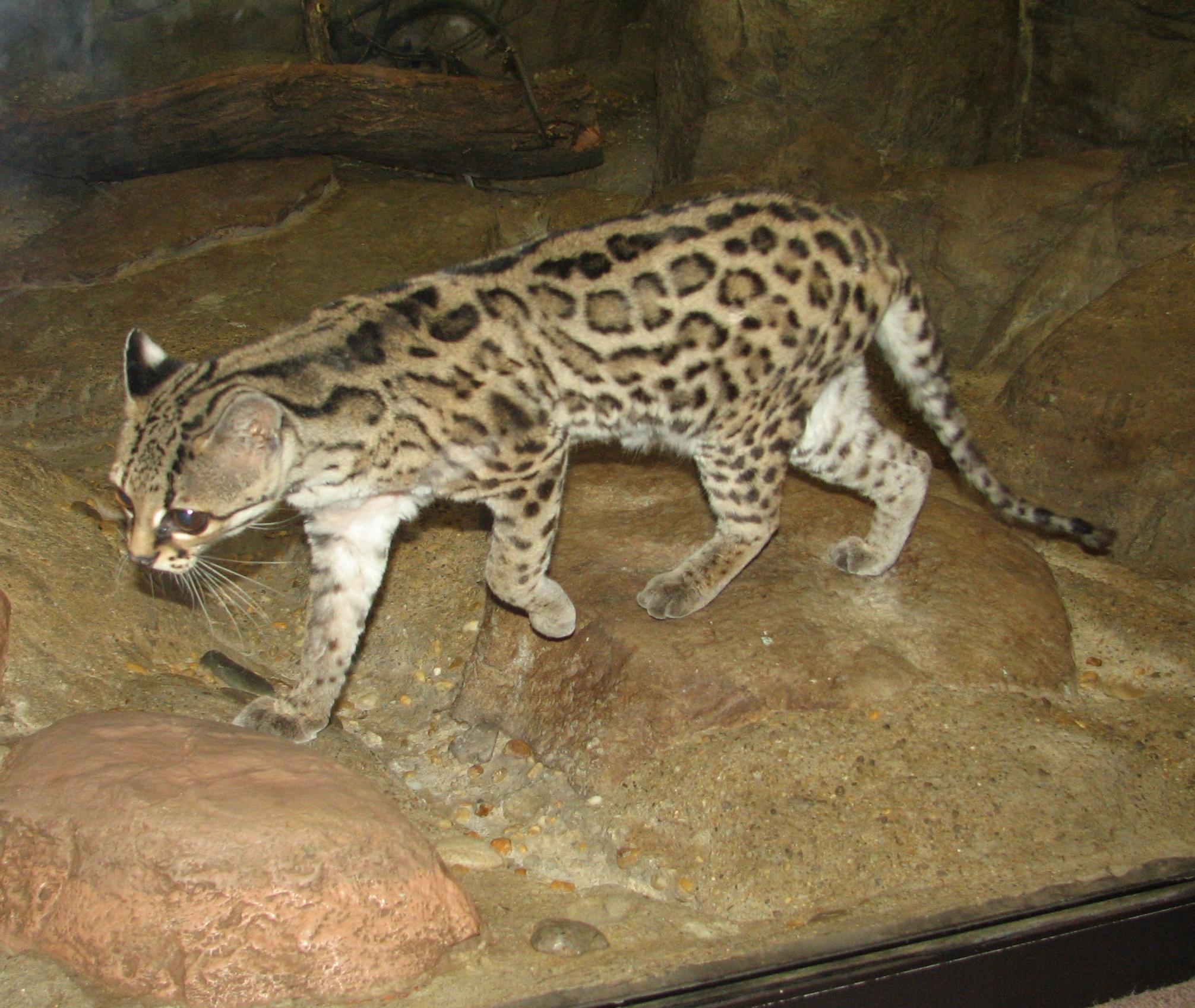 7 best Animales nativos del Paraguay images on Pinterest